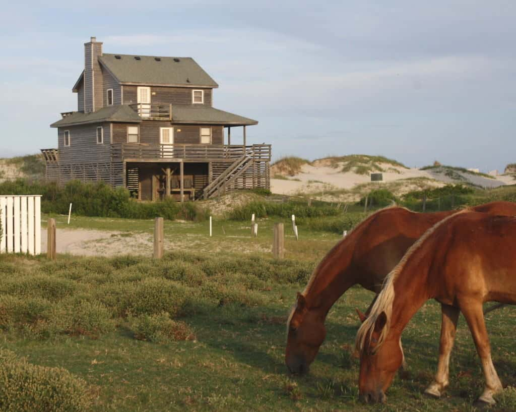 wild-horses-outer-banks