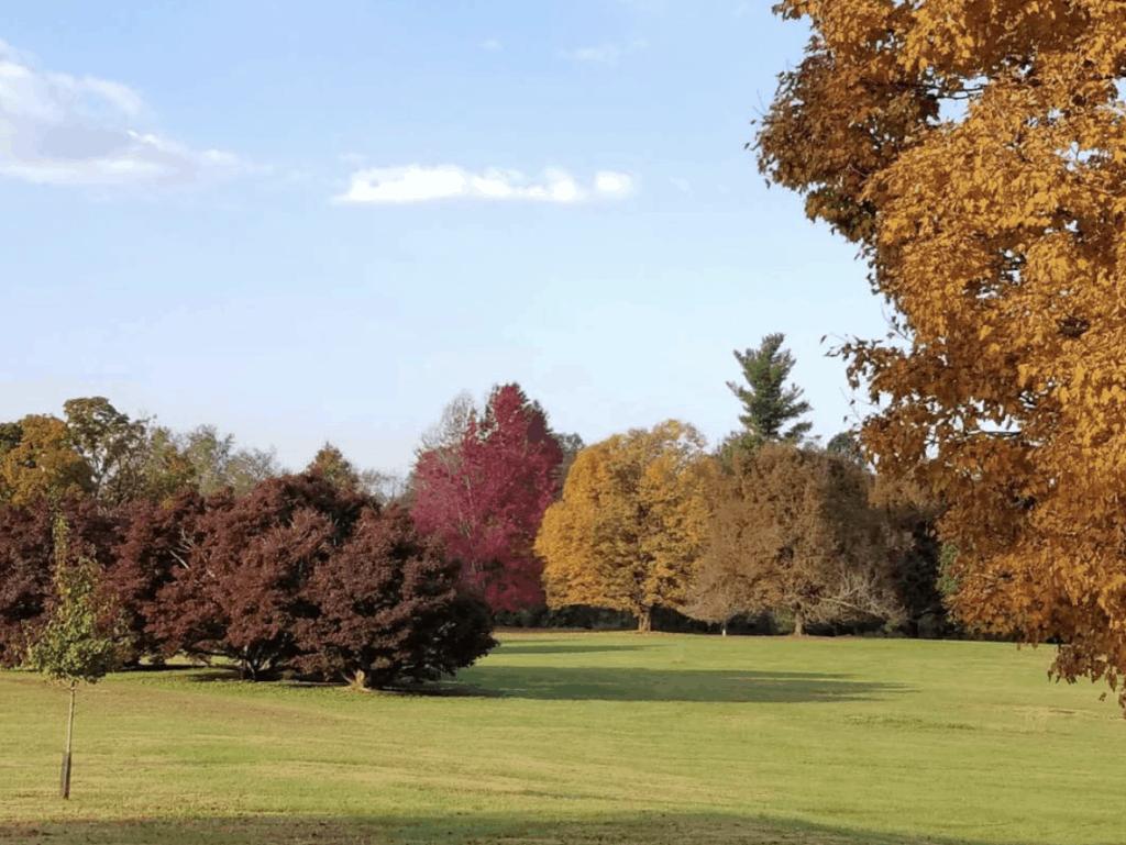 Fall at Bernhiem