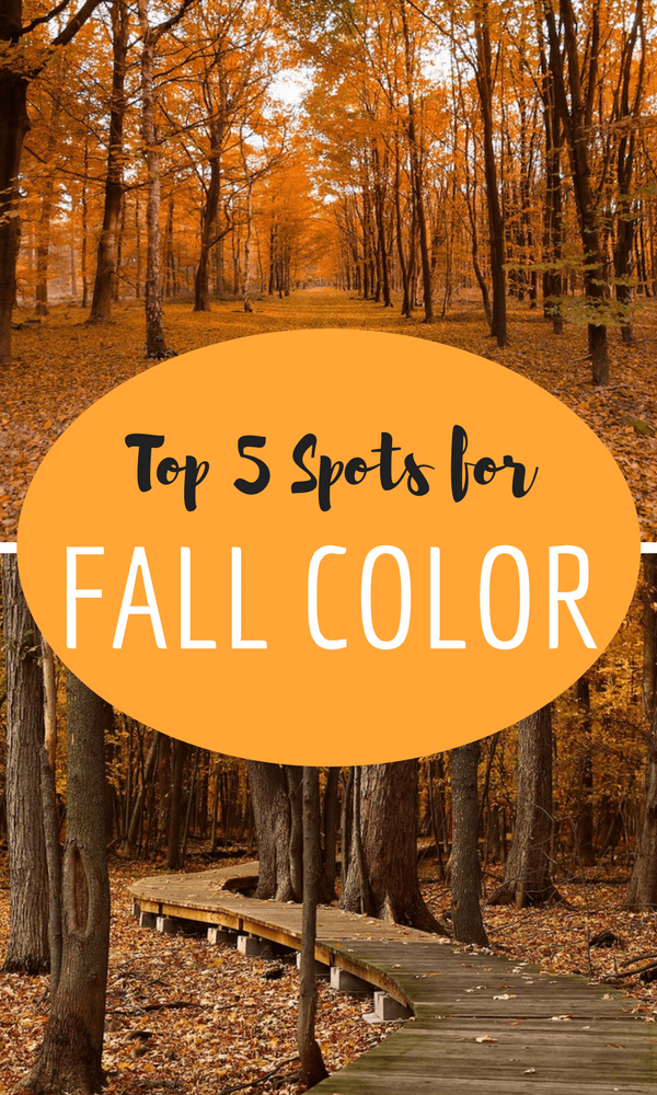 If you love fall colors as much as we do, you've got to take a look at our Top 5 Spots for Fall Color