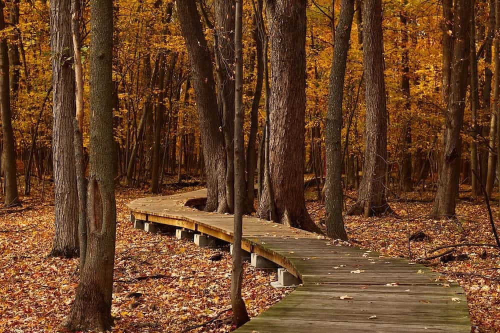 Top 5 Spots to see Fall Colors