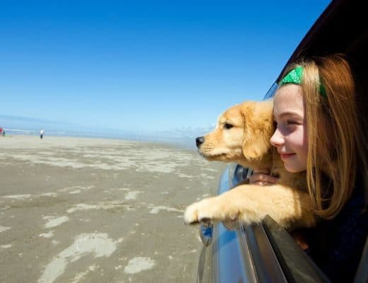 10944773 - child and her puppy dog with head out car window at the beach