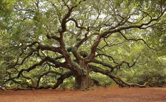 Oak Island En Espanol
