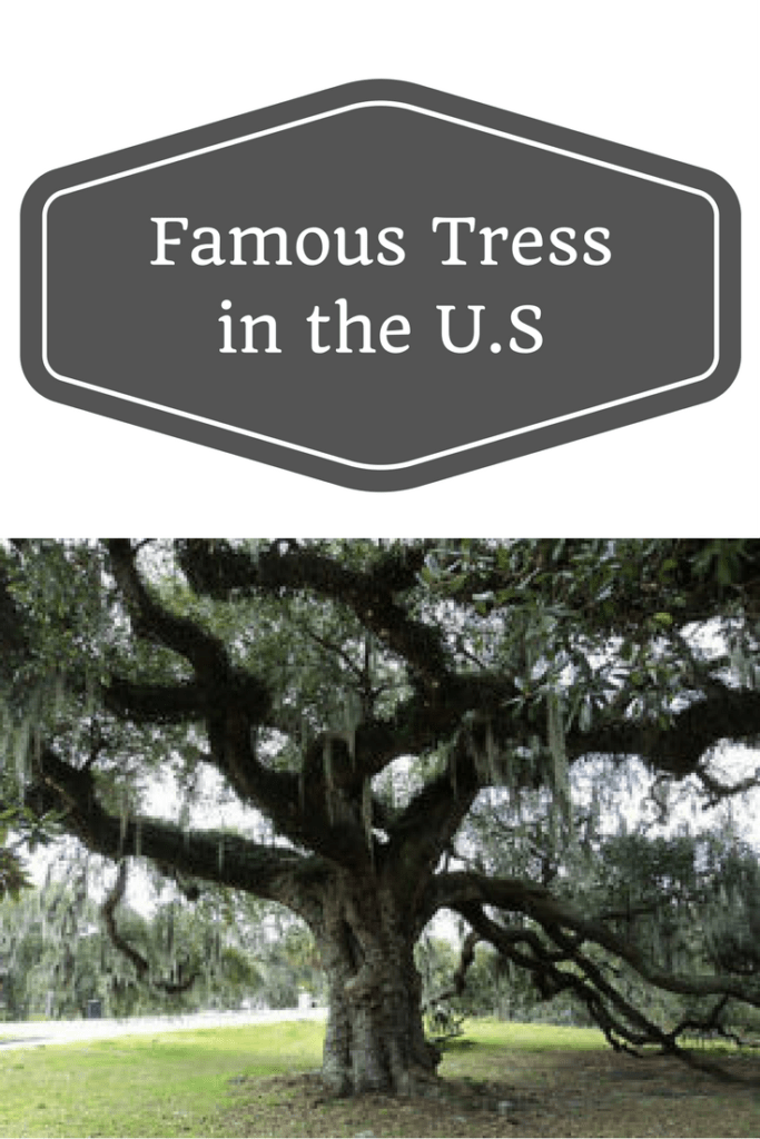 Famous Tress in the U.S