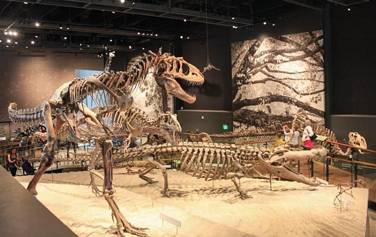 Natural History Museum in SLC, Utah