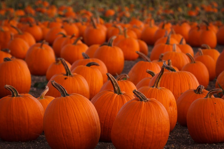 Pumpkin Patches in Kentucky and Indiana
