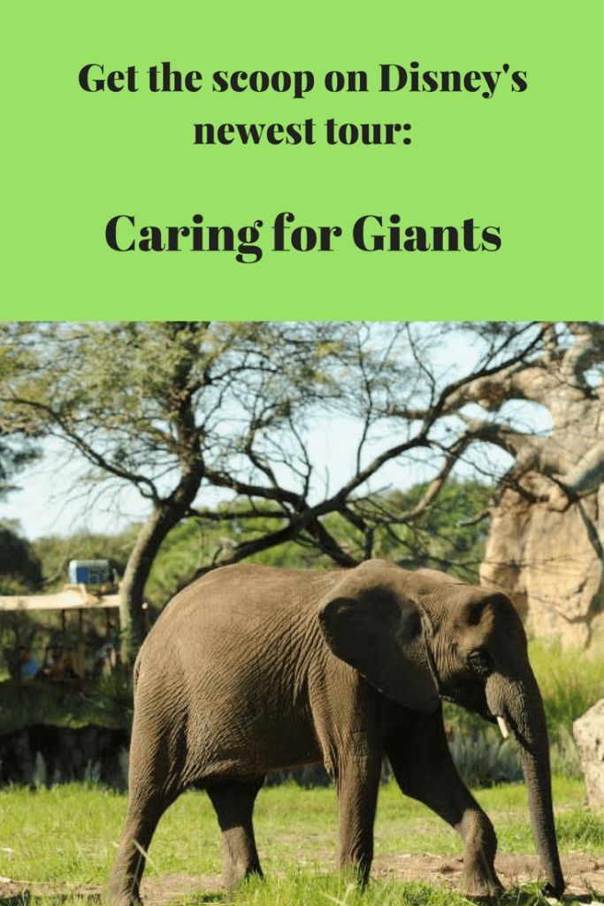 Caring for Giants