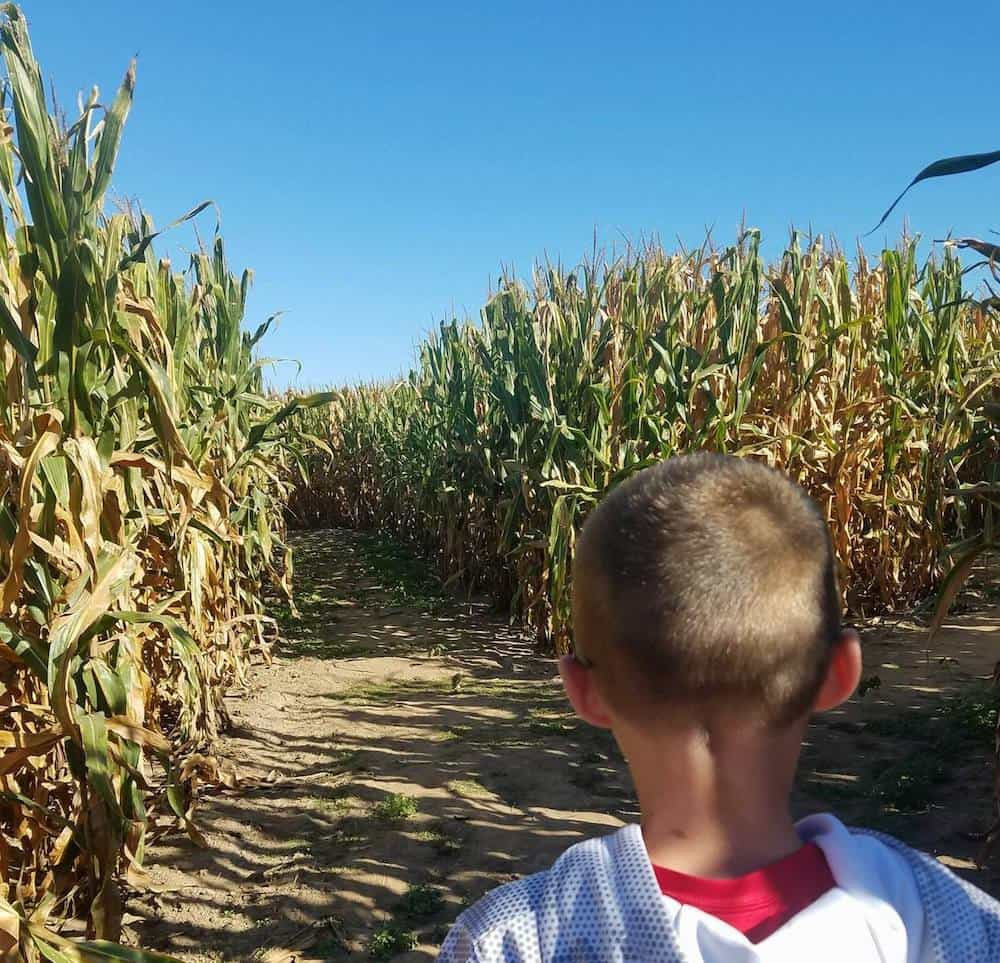 Corn Maze at Exploration Acres