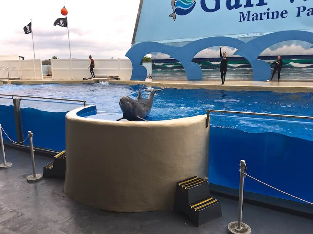 Gulf World by Dolphin Discovery in Panama City Beach, Florida