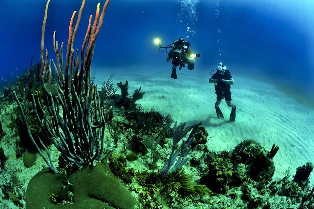 Top 3 Scuba Destinations in the US