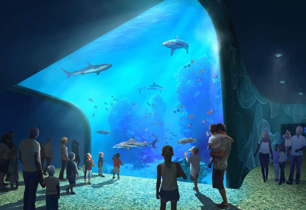 Rendering of the shark enclosure at the St. Louis Aquarium